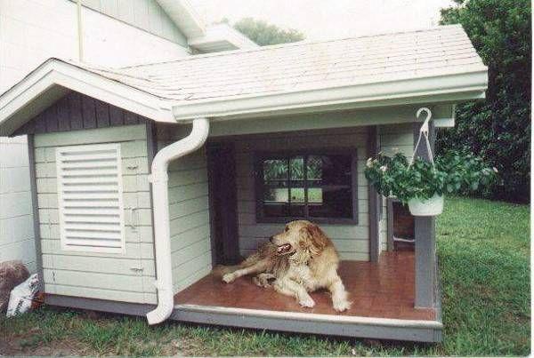 Cucce per cani da esterno acquistale su amazon cura le for Costruire cuccia per cani da esterno