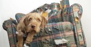 Costi delle assicurazioni canine